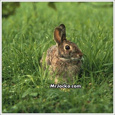 rabbit01
