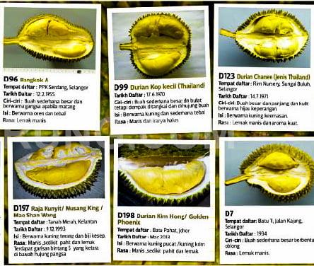 jenis durian terbaik di malaysia