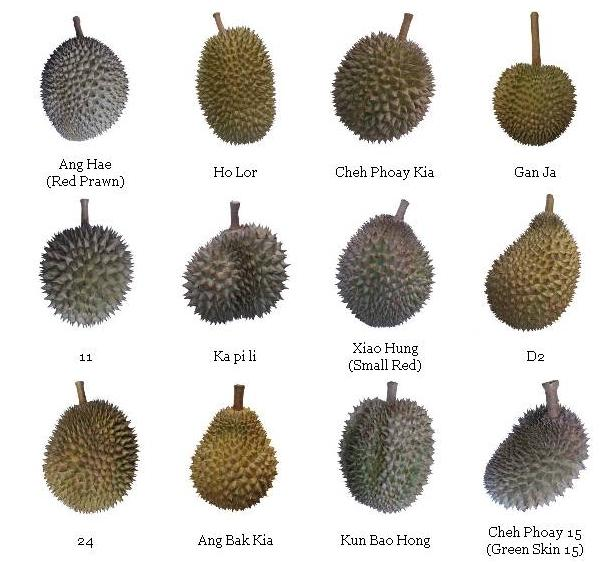 Jenis Durian Terbaik Di Malaysia Yang Sedap Dan Mahal