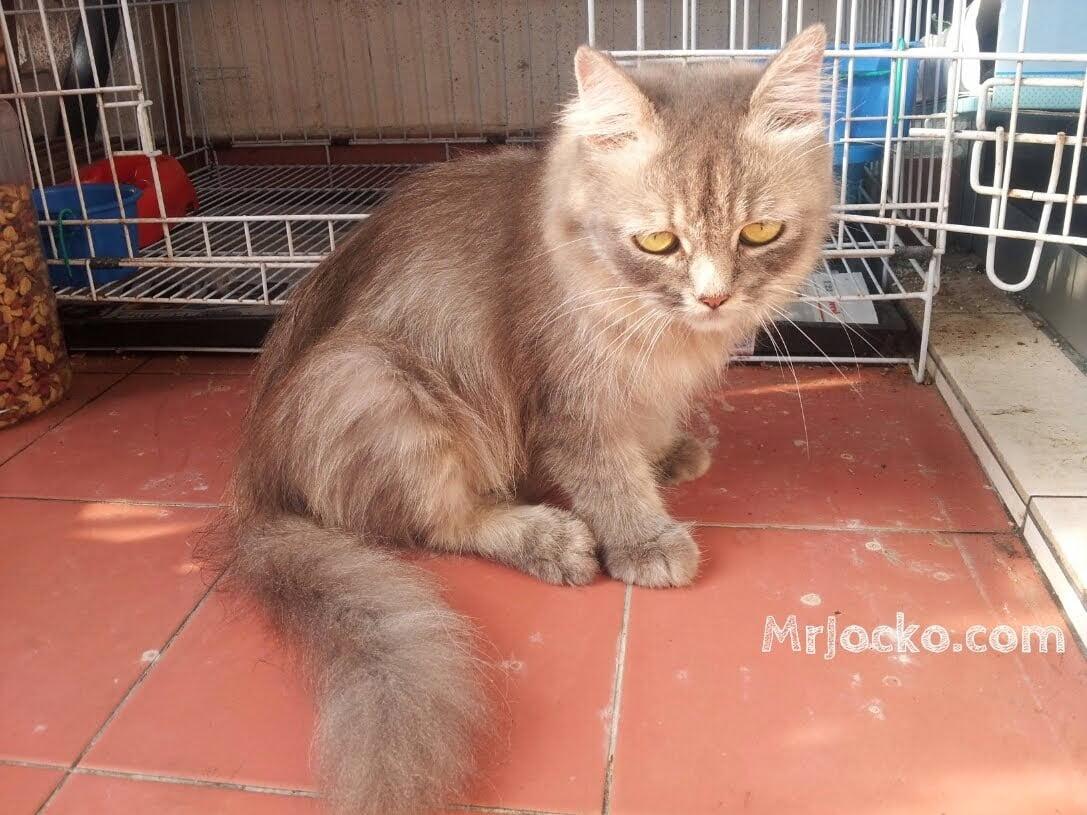 tanda-kucing-bunting-01
