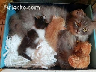 Projek Nyah Kutu Anak Kucing