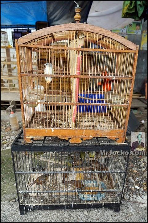 Uniknya Pasar Burung Di Jalan Peta Bandung
