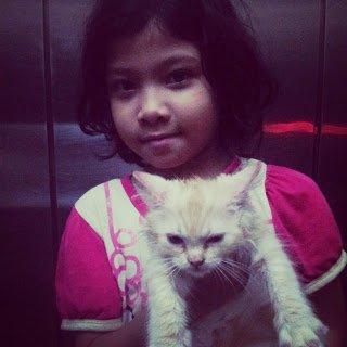 Anak Kucing Oren