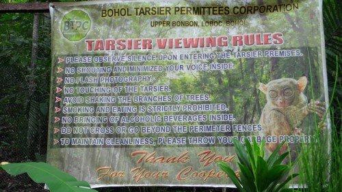 Tarsier Watching Bohol