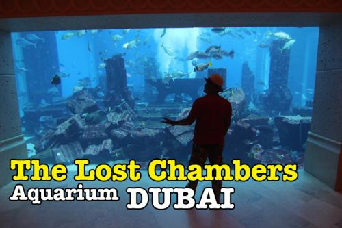 The Lost Chambers Aquarium Atlantis Di Dubai Yang Menakjubkan