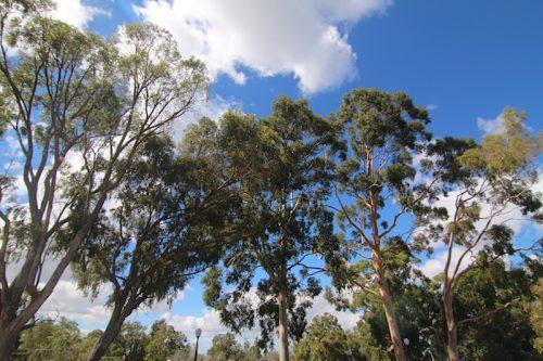 Kings Park Botanic Garden Perth
