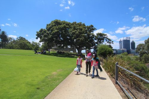 Kings-Park-Botanic-Garden-Perth_12