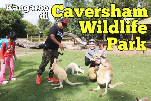 Kangaroo Di Caversham Wildlife Park Perth