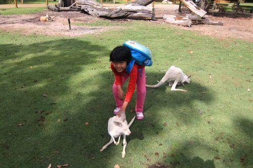 kangaroo-caversham-wildlife-park-09