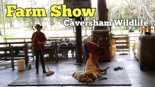 Farm Show Di Caversham Wildlife Park Perth