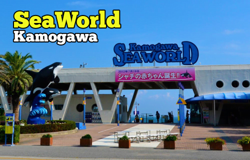 Kamogawa Sea World Aquarium Besar Terbaik di Chiba