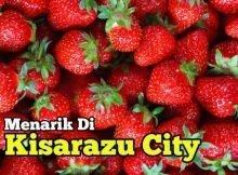 strawberry_picking-copy-kisarazu-city-chiba