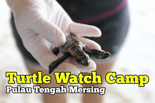 turtle watch camp mersing