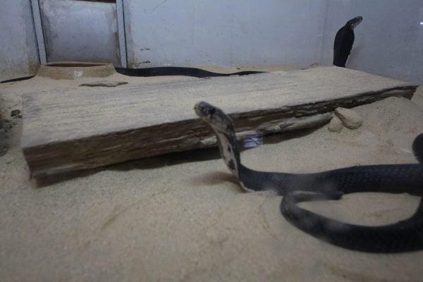 taman_ular_dan_reptilia_perlis_03