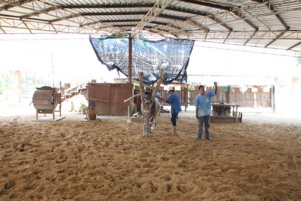 baan kwai buffalo village suphanburi