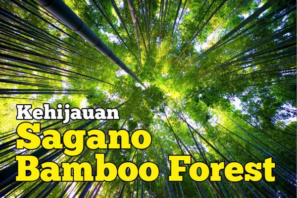 Kehijauan Sagano Bamboo Forest Di Arashiyama Yang Memukau