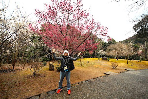 promosi airasiago musim sakura