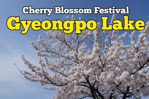 Pesta Cherry Blossom Festival Gyeongpo Lake Korea