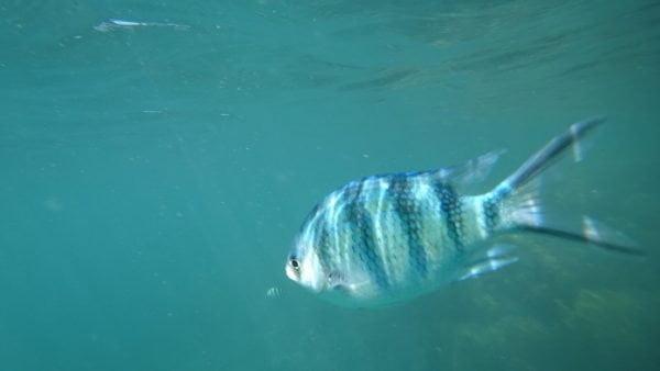 snorkeling di koh samui