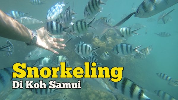 Pengalaman Snorkeling Di Koh Samui Pulau Cantik Di Thailand