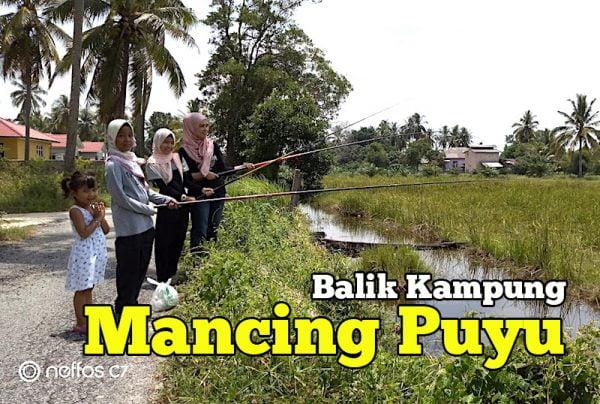 Cerita Balik Kampung Mancing Ikan Puyu Di Taliair Sawah Padi
