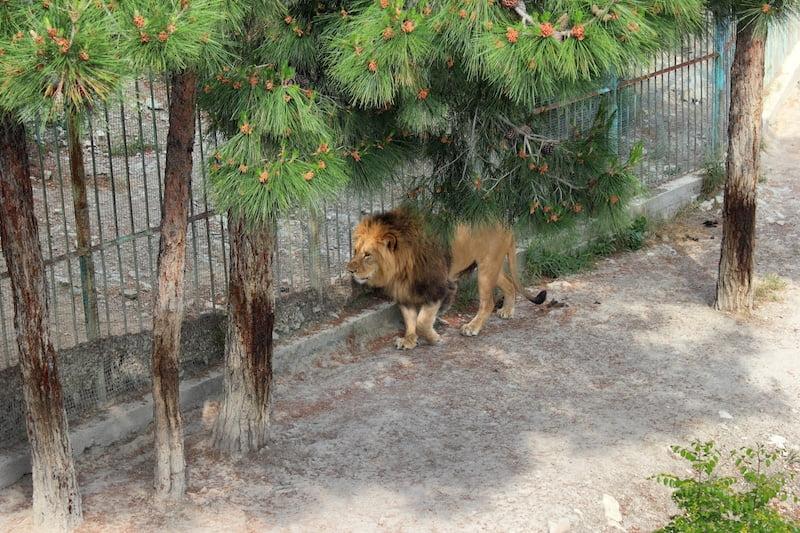 taman tema terkenal di russia 03 Safari Park