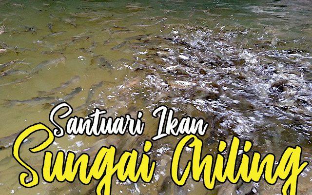 Santuari Ikan Sungai Chiling Hulu Selangor