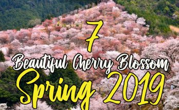 beautiful cherry blossom spots spring 2019beautiful cherry blossom spots spring 2019