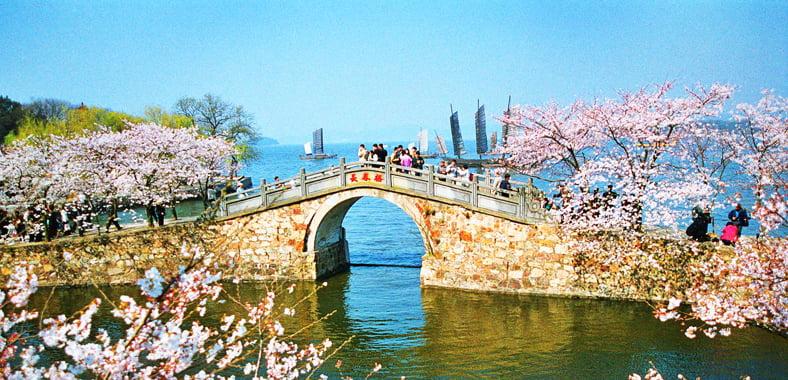 Yuantouzhu Cherry Blossom