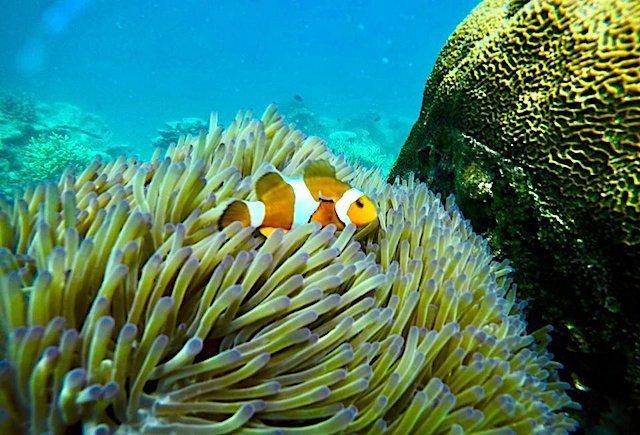 Pengalaman+Scuba+Diving+Di+Kampung+Genting+Pulau+Tioman+05