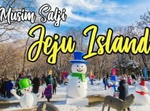 gambar-musim-salji-di-jeju-island copy
