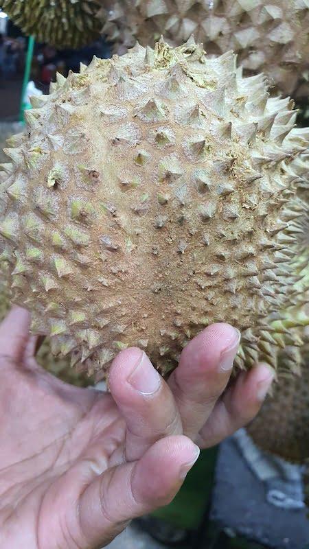 Cara Nak Kenal Buah Durian Musang King 02