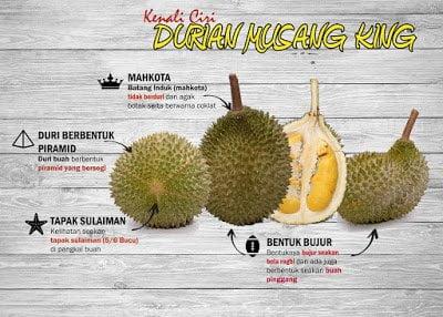 Cara Nak Kenal Buah Durian Musang King 07