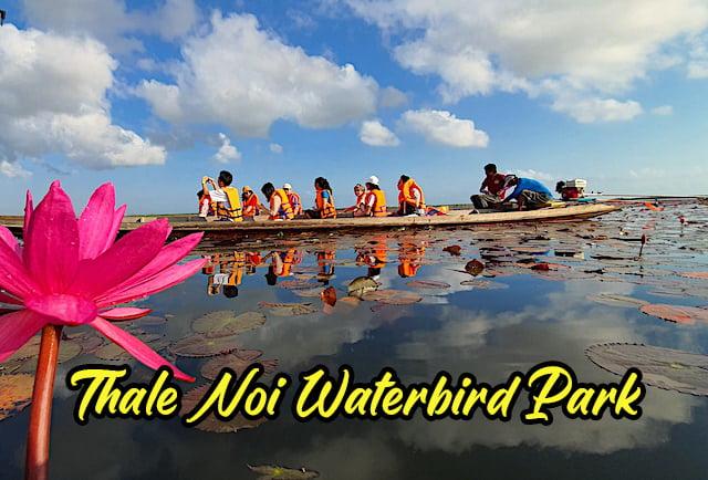 Lotus_Thale_Noi_Waterbird_Park_Phatthalung_06 copy