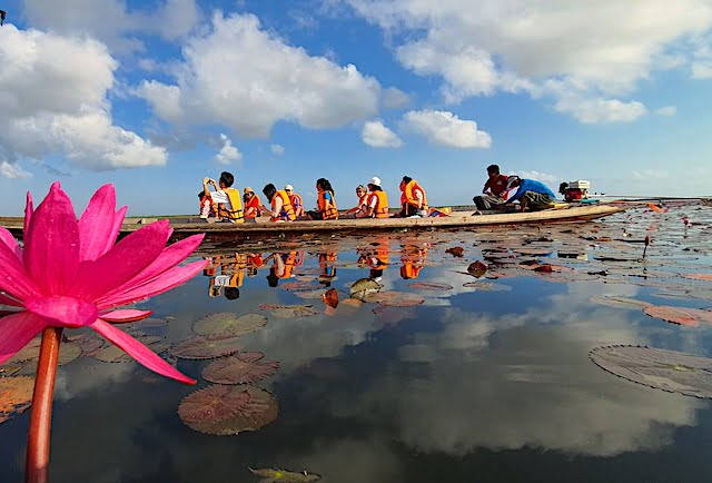 Lotus_Thale_Noi_Waterbird_Park_Phatthalung_06