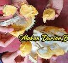 Makan Durian Bukit Jalan Tapah Cameron Highlands 06 copy