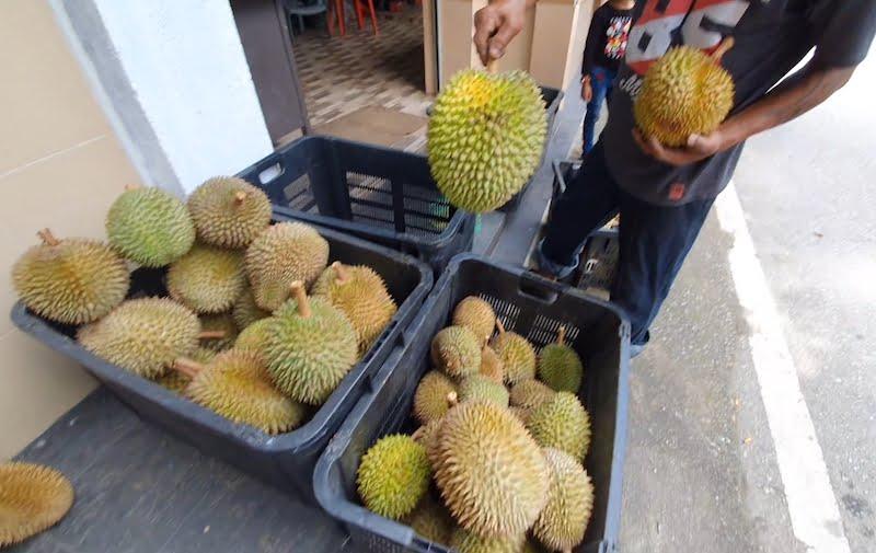Makan Durian Bukit Jalan Tapah Cameron Highlands 08