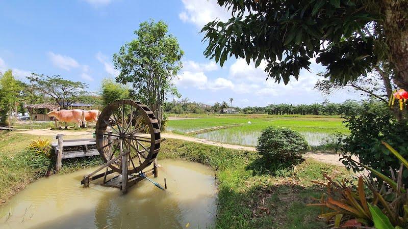 Napokae Learning Centre Muzium Sawah Padi Khuan Khanun 04