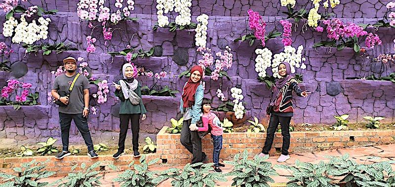 Harga Tiket Masuk Ke Lavender Garden Cameron Highlands 04