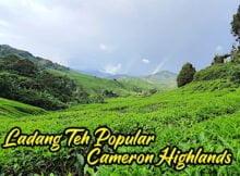 Ladang_Teh_Popular_Di_Cameron_Highlands_03 copy