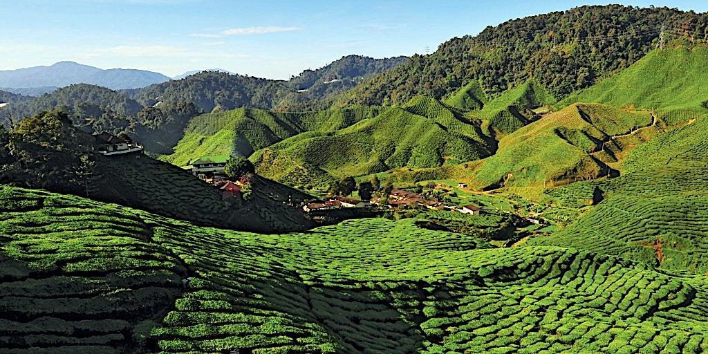 SCENIC VIEW OF THE TEA PLANTATION (CAMERON HIGHLAND) - PAHANG