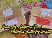 Butterfly Adoption Dari Melaka Butterfly And Reptile Sanctuary Part 1 copy