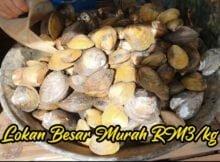 Lokan-Besar-Di-Kelantan-Cuma-RM3-Sekilo-01 copy
