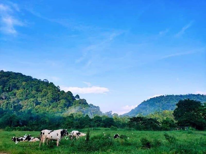 SRZ-Ternak-Ladang-Tenusu-Jeram-Mengaji-Selising-05