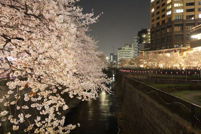 Meguro-River-Cherry-Blossoms-Japan